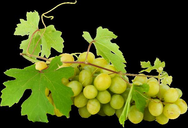 Foire aux vins : p'tit bilan