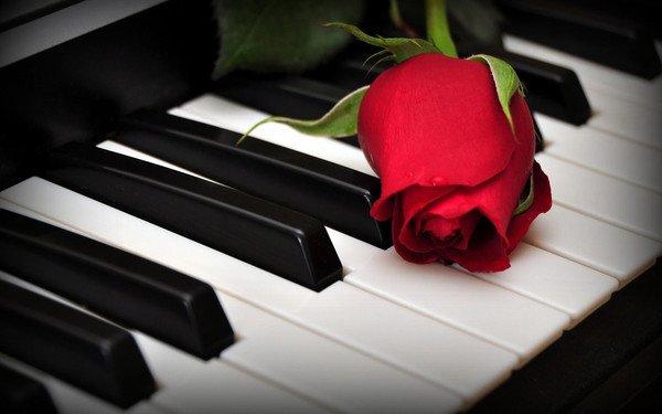 Une rose pour un jour et toi pour toujours