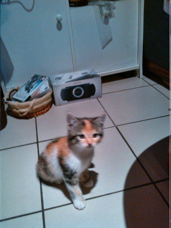 mon chat
