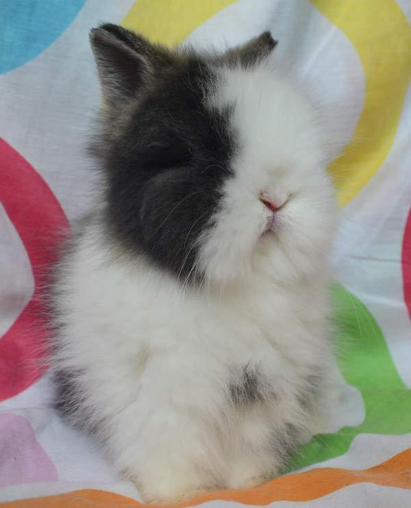 on dirais mon lapin mais en plus petit et en plus blazé