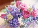 Photo de Lilas-violette