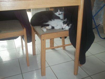mes deux chat ensembleeee