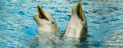 spectacle : Les dauphins