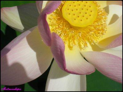 Juste une fleur...
