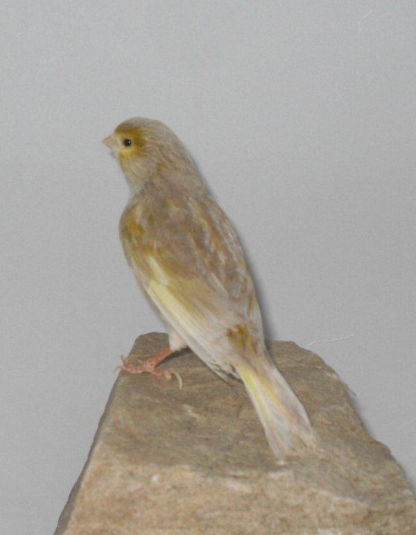 jaspe brun mosaïque jaune