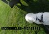 Photo de Incroyables-Monstres