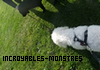 Incroyables-Monstres