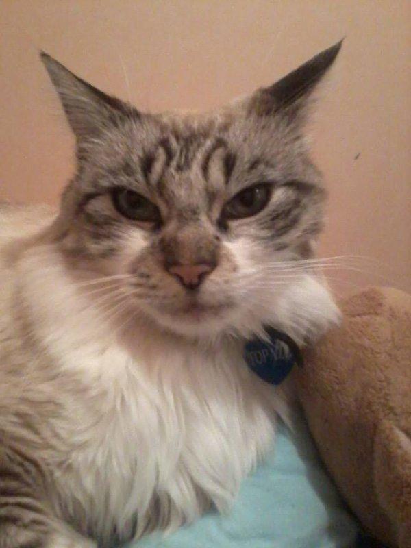 au revoir mon chaton de 12 ans