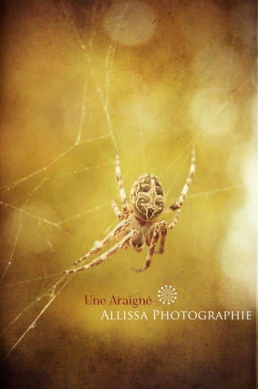 Une araigné