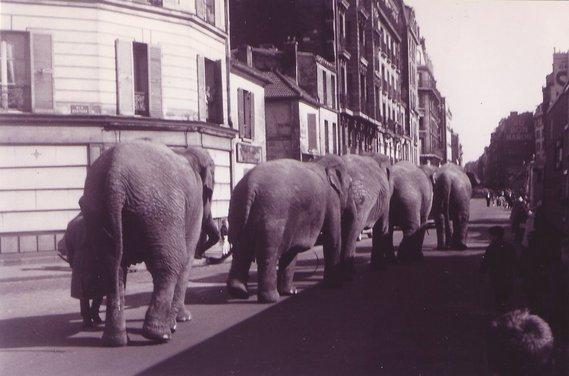 Petite balade des éléphants du cirque Pinder ...
