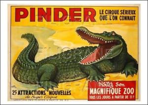 Mon bricolage la voiture cage crocodiles 2