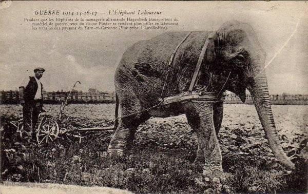 Pour la Petite histoire des Éléphants chez Pinder