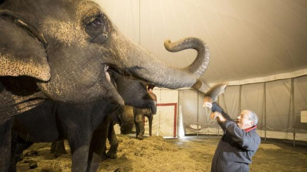 Entretien de Gilbert Gruss , sur l'avenir des cirques sans animaux ...