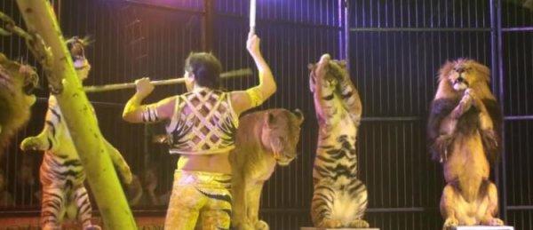 Interdiction des animaux exotiques dans les cirques au Portugal à partir de 2024