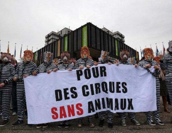 Quant à Montpellier, la ville interdit les cirques avec animaux sauvages