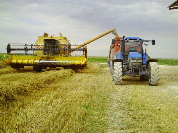 fauchage de blé pour semence