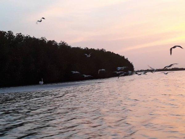 Le Saloum est un fleuve du Sénégal, long de 250 km dans la région naturelle du Sine-Saloum. ... C'est là, à l'abri dans les racines des palétuviers, que les poissons viennent frayer. ... hérons goliath, martins-pêcheurs, pélicans, flamants roses, aigles pêcheurs et jabirus peuplent les innombrables îles qui parsèment le delta.