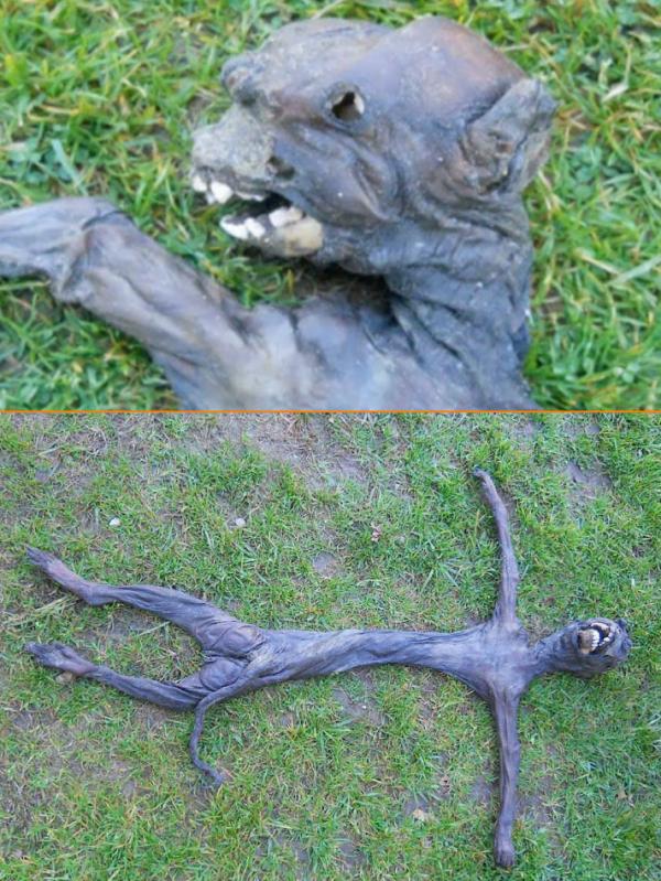 Une étrange créature découverte morte en Afrique du Sud