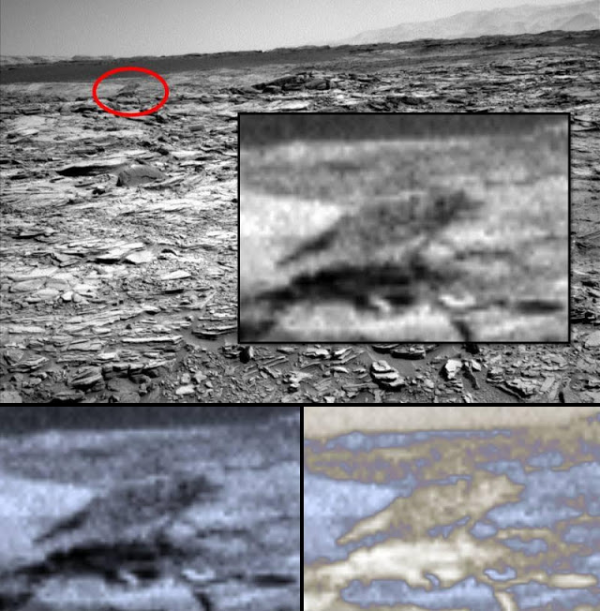 Un loup photographié sur la planète Mars ?