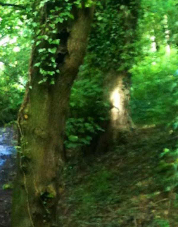 Dossier Spécial n°36 : Un fantôme photographié dans une forêt en Angleterre