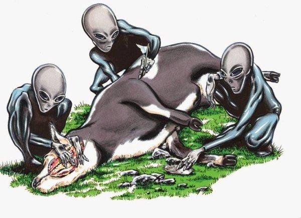 Des vaches étrangement mutilées découvertes aux USA