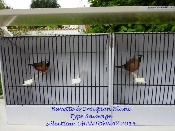 Ma Sélection Chantonnay Edition 2014