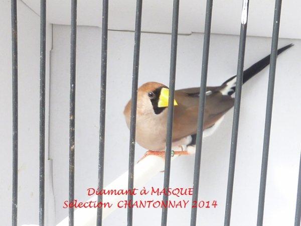 Sélection CHANTONNAY 2014  Suite...