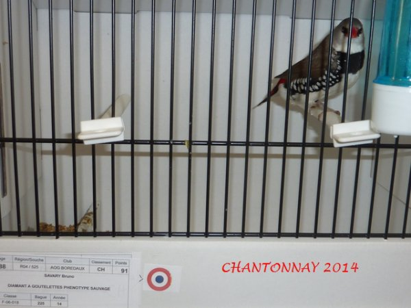 Chantonnay 2014  Photos des Champions..