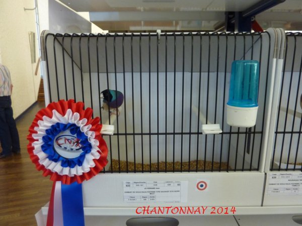 Chantonnay 2014 Photos des Champions suite .....