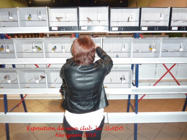 Concours de mon Club La SLADO (Société Libournaise des Amis Des Oiseaux)