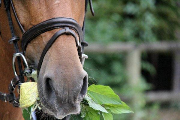 Juste un cheval