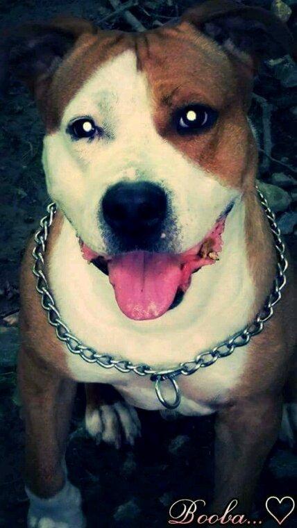 Mon baby dog !