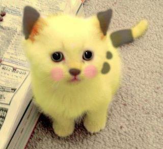 Pikachuuuu.. ! <3