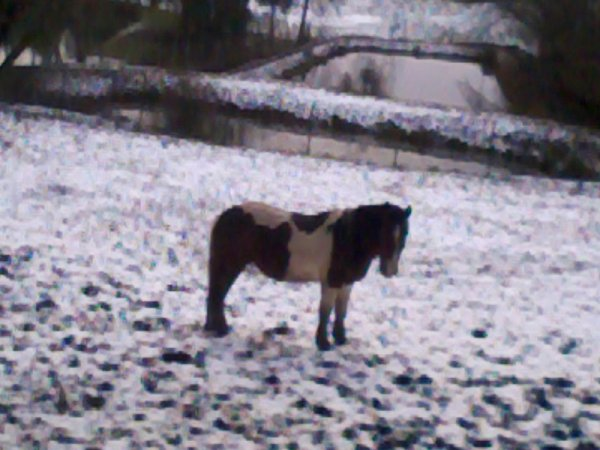 mon toto dans la neige
