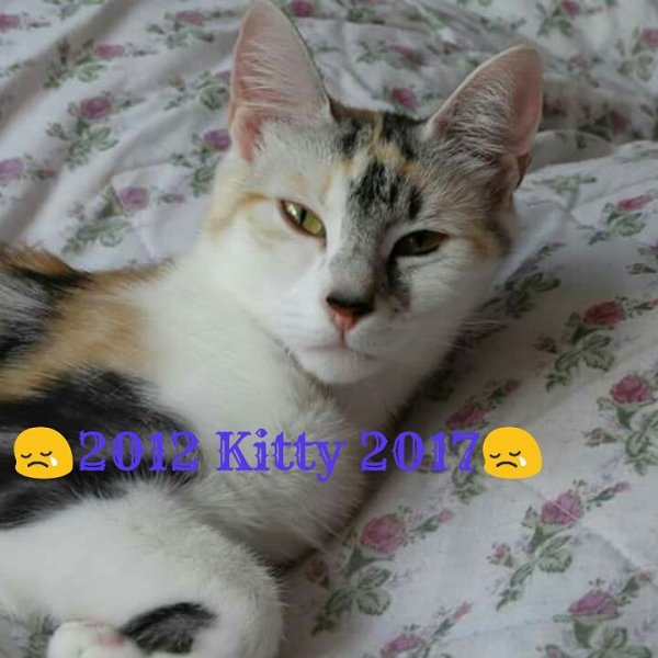 KITTY 😢