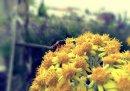 Photo de effet-photofiltre