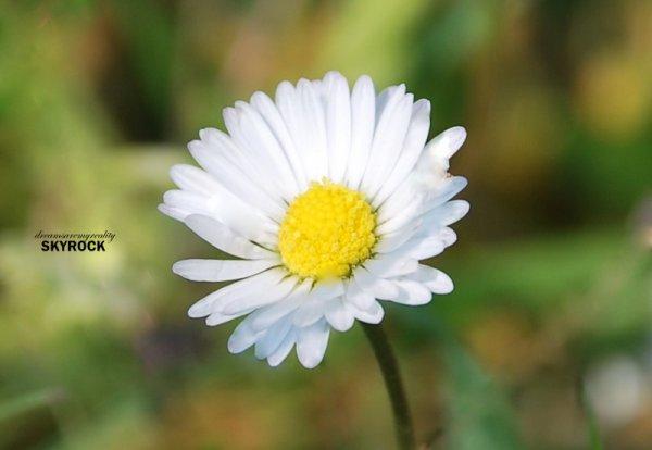 Nature is precious, beautiful and wonderful. 3