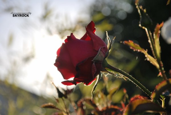 Nature is precious, beautiful and wonderful. 4