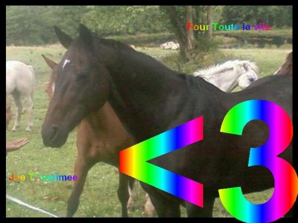 ☆☆ .-:*♥♥`*:-. ☆  == >|| AurevOir ma GelinOtte ... || < == ☆ .-:*♥♥`*:-. ☆☆