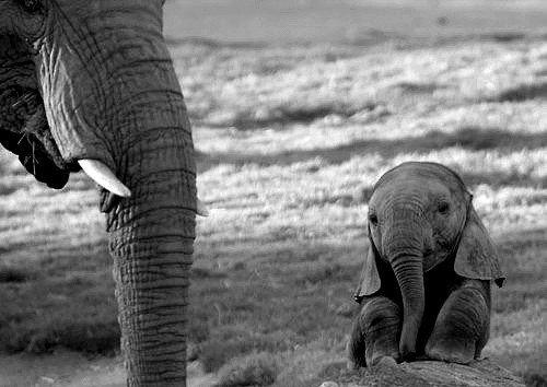 Stop au massacre des éléphants! Allez les gens on signe la pétition !!