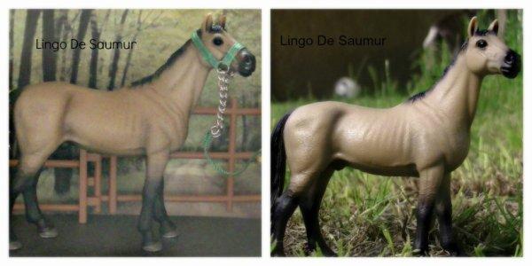 Lingo De Saumur