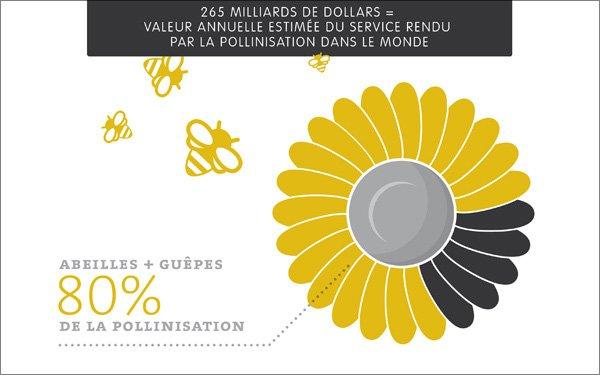 dossier la disparition des abeilles et ses cons quences le savoir animal blog animalier. Black Bedroom Furniture Sets. Home Design Ideas