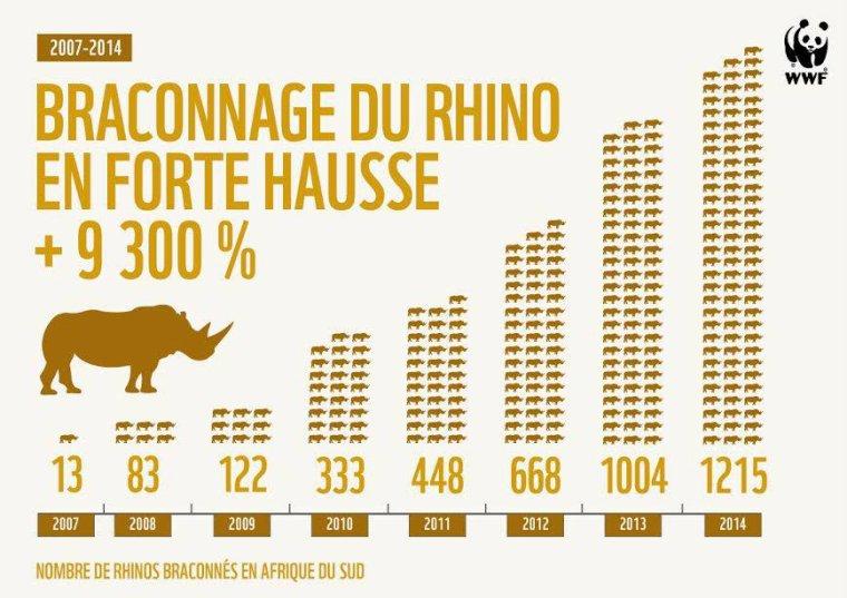Hausse du braconnage de rhinocéros en Afrique du Sud