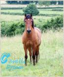 Photo de cavalli-dream