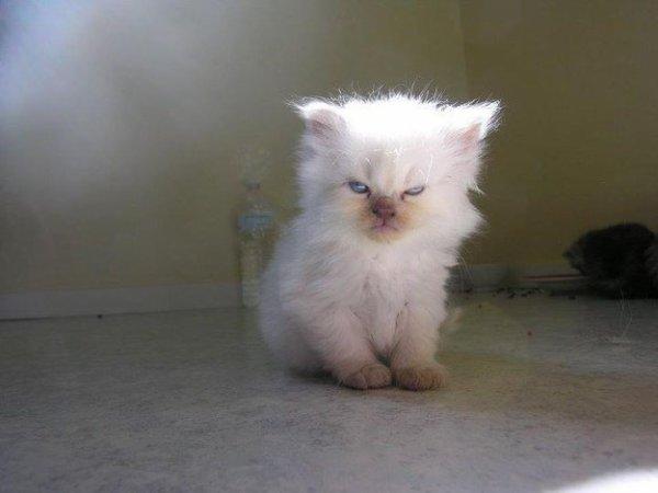 Monday. Meow...