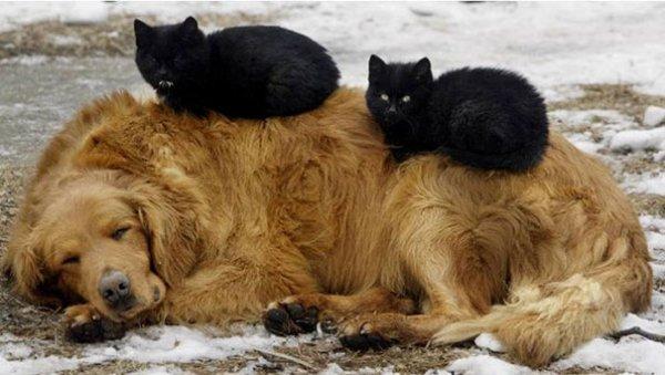 Some Fur-on-Fur Action!