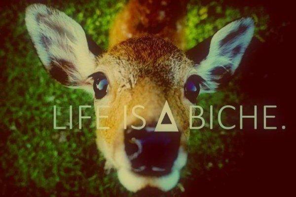 LIFE IS BI***