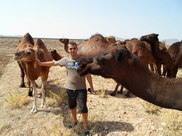 vaccans au sahara
