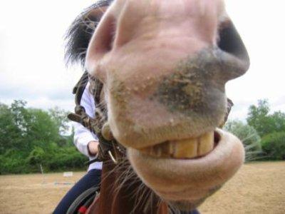 Image cheval qui rigole - Frison qui saute ...