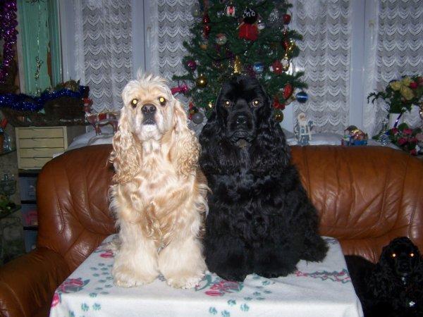 Bella et Janvier, mes chiens